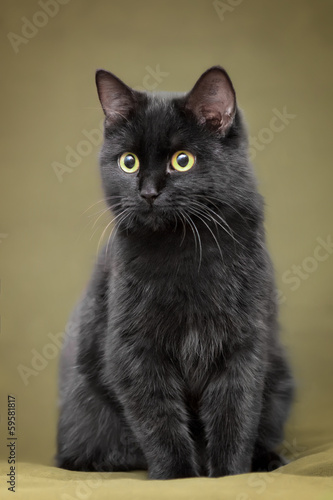 Beautiful black cat with yellow eyes sitting on blanket