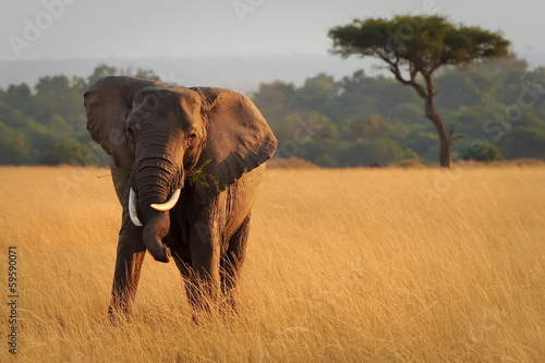 Foto op Plexiglas Afrika Masai Mara Elephant