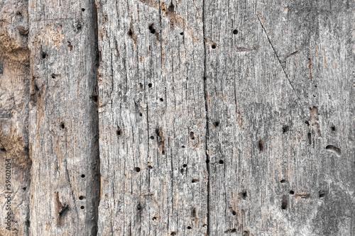 Altes Holz Mit Holzwurm Kaufen Sie Dieses Foto Und Finden Sie