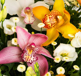 Natural colorful orchids
