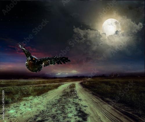 Foto op Plexiglas Volle maan road in the night and owl