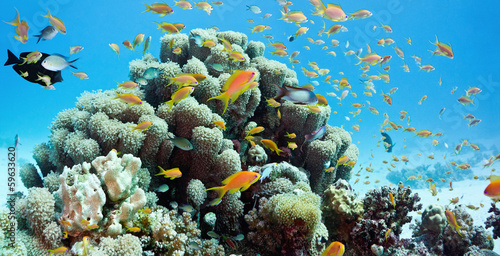 Coral reef scene - panorama #59633620