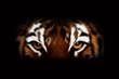 Tiger - digital art