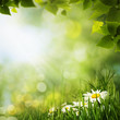 Green meadow with daisy flowes, natural backgrounds for your des