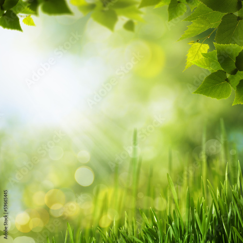 Poster Jaune Beauty forest backgrounds for your design