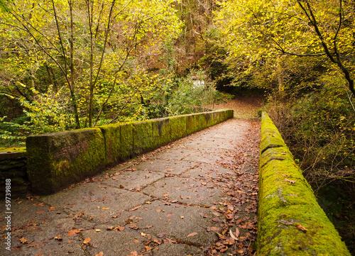 Foto auf Leinwand Garten Fragas do Eume forest