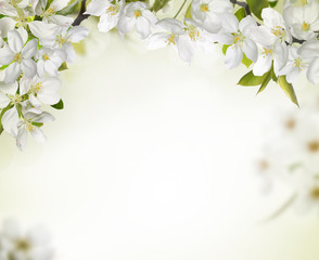 Fototapeta Spring cherry blossom backgrounds