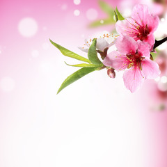 Panel Szklany Closeup of peach flower