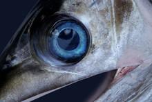 Sword Fish Eye