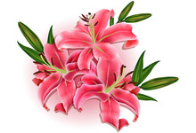 Beautiful Gift Card With Pink Lilies