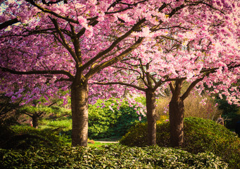 Fototapeta Romantyczny Colors of spring