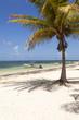 Idyllic beach with coconut tree at Mexico