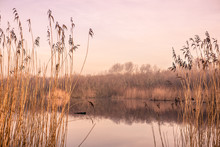 Idyllic Lake