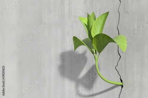 Little 3d plant growing on a concrete wall Canvas Print