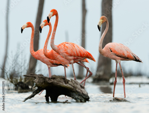 Photo Stands Flamingo The flamingos walk on water.