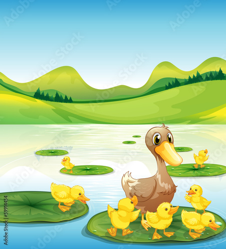 Canvas Prints River, lake A duck and her ducklings at the pond