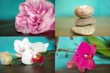 Orchideen und Meditation