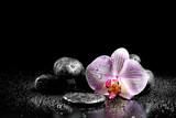 Orchidea i kamienie zen