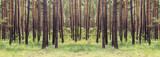 Fototapeta Las - forest