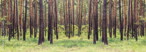 Printed kitchen splashbacks Forest forest