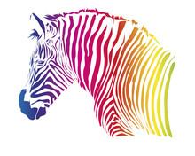 Nice Head Of Zebra Isolated On...