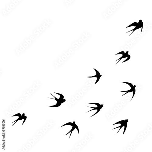 Fotomural  Schwalben Tattoo Vorlage Vektor Silhouette