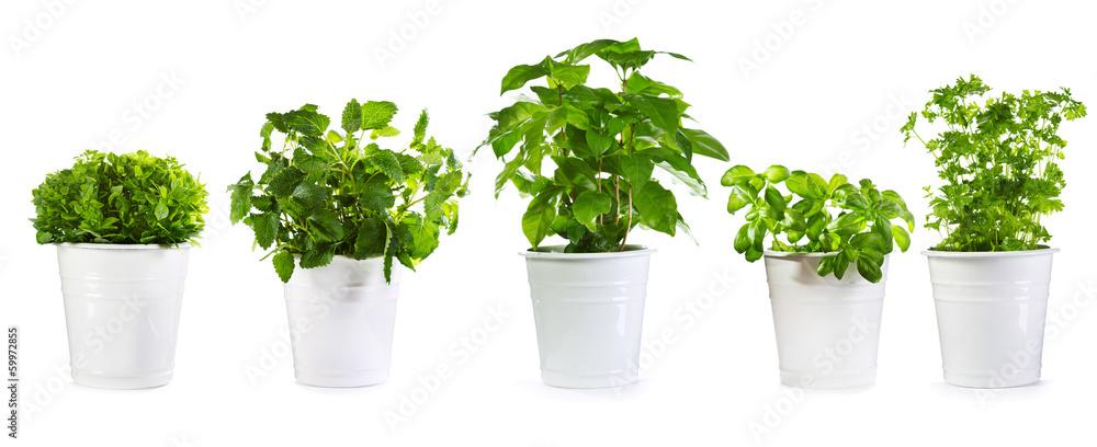 Fototapety, obrazy: set of potted green plants