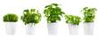 Leinwandbild Motiv set of potted green plants