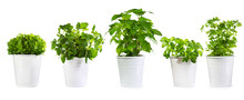 Set Of Potted Green Plants