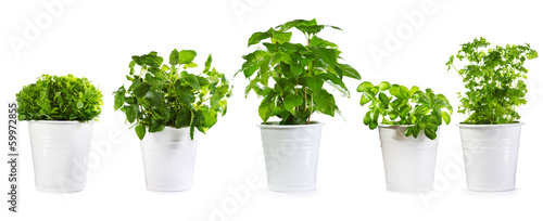 Poster de jardin Vegetal set of potted green plants