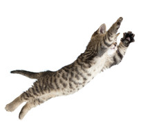 Flying Or Jumping Kitten Cat I...