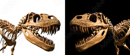 Naklejka premium Szkielet Tyrannosaurus Rex na czarno-biały backgroun