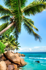 Fototapeta Morze tropical beach with palm