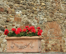 Red Geranium Flowers In Elegant  Ceramic Box