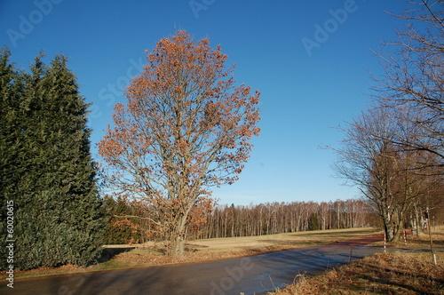 Sonniger Weg mit kahlen Bäumen © alisseja
