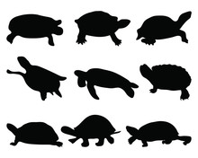 Black Silhouettes Of Turtle, V...