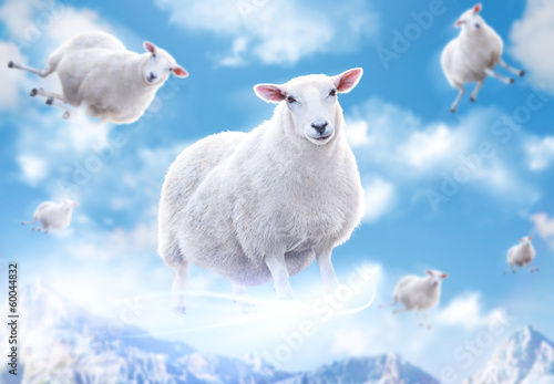 Sheeps in clouds