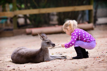 Young Girl And Kangaroo In The...