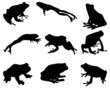 Black silhouettes of  frog, vector