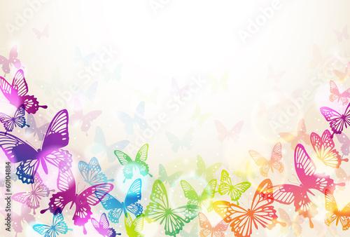 蝶々 - 60104884