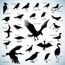 Birds Silhouettes