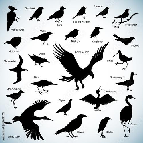 Valokuva  Birds silhouettes