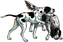 English Pointer And Setter