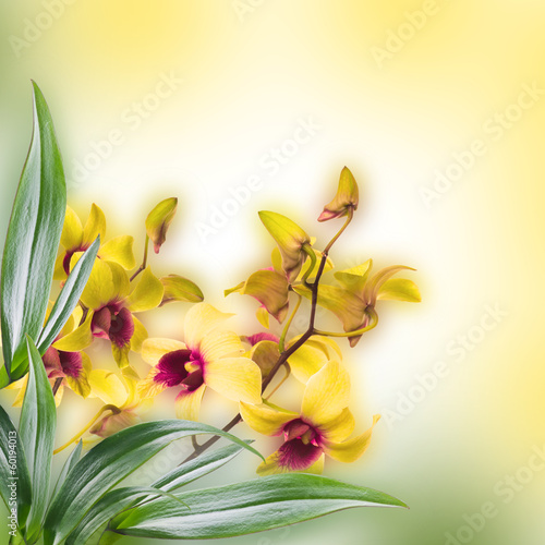 Naklejka na szybę Floral background of tropical orchids