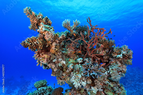 Staande foto Koraalriffen Coral structure in the tropical reef of the red sea