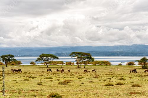 Staande foto Afrika naivasha lake