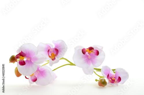 Foto auf Gartenposter Orchideen Orchidee