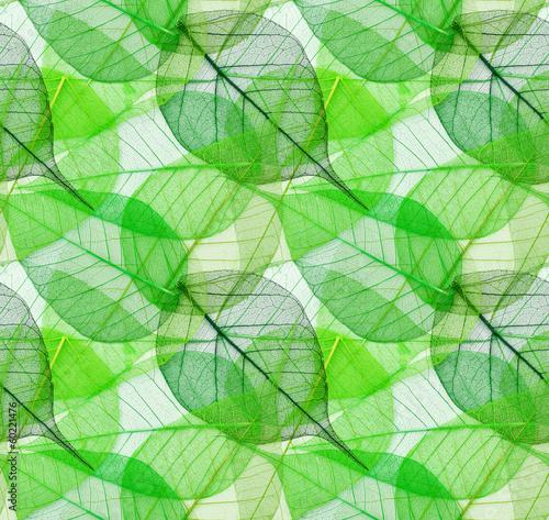 makro-zielen-opuszcza-bezszwowego-tlo