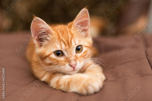 Fotografía  Small  kitten lie on the bed