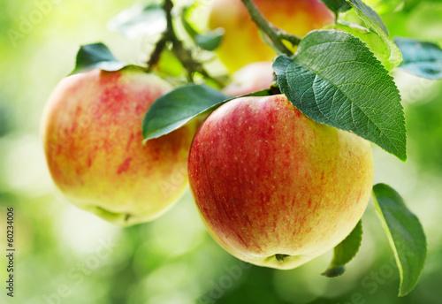 fototapeta na szkło czerwone jabłka